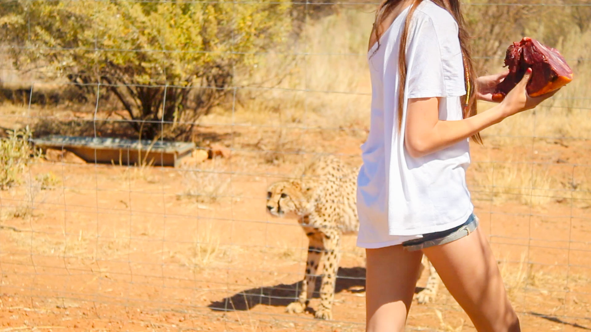 Ella with Cheetah at Naankuse Wildlife Sanctuary Namibia