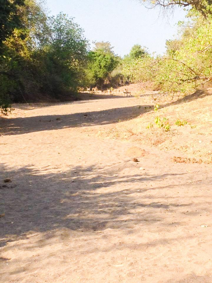 Impala in Zambia Africa
