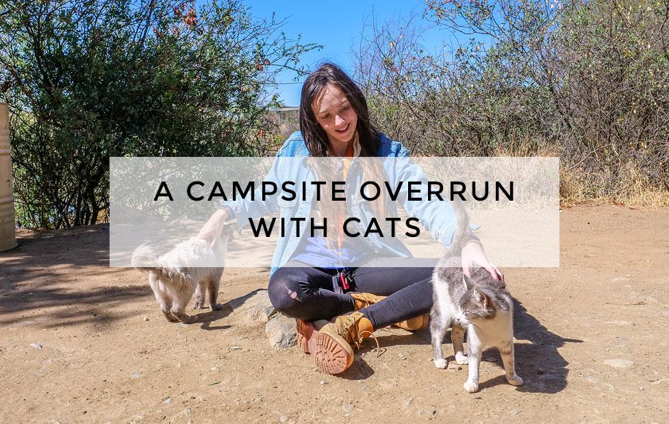 campsite_overrun_cats